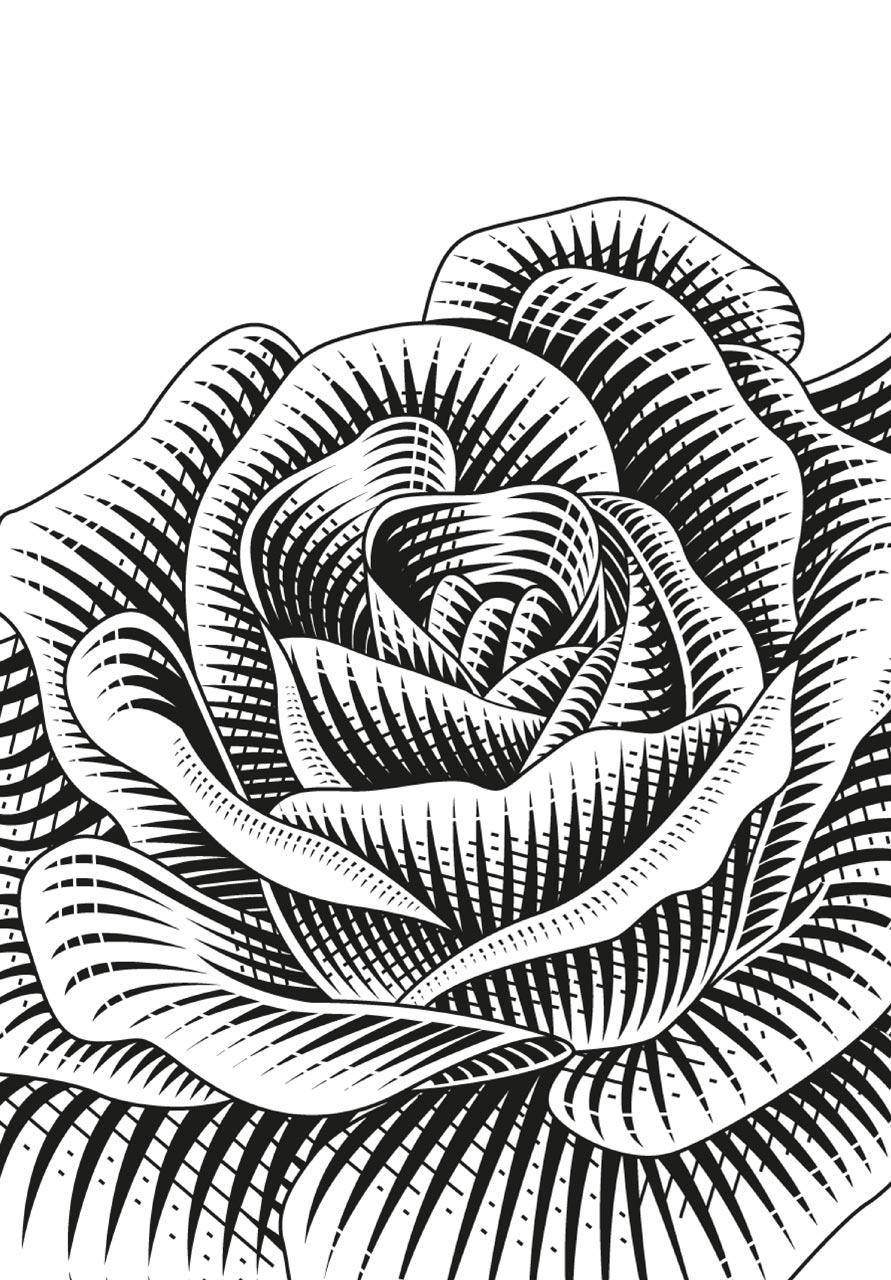 Bird Circus Rose