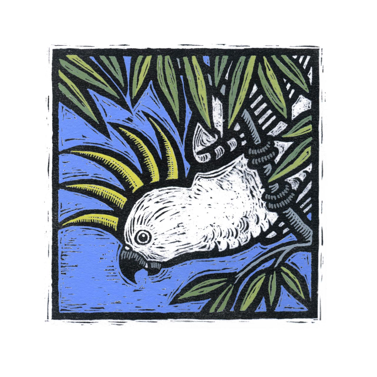 Fauna sulphur-crested cockatoo